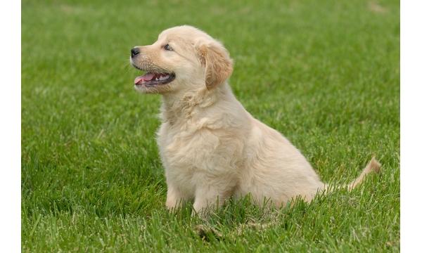 garden-dog-friendly-1-